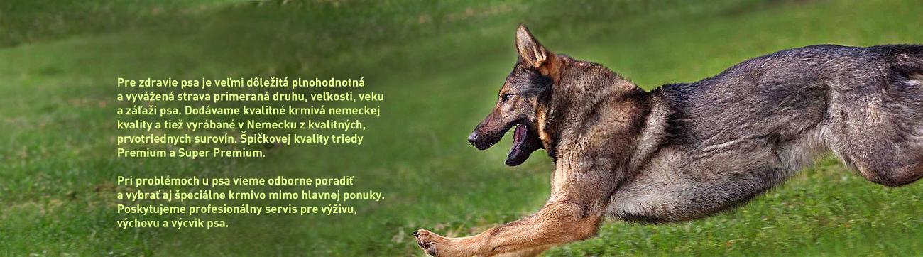 Dog kurier